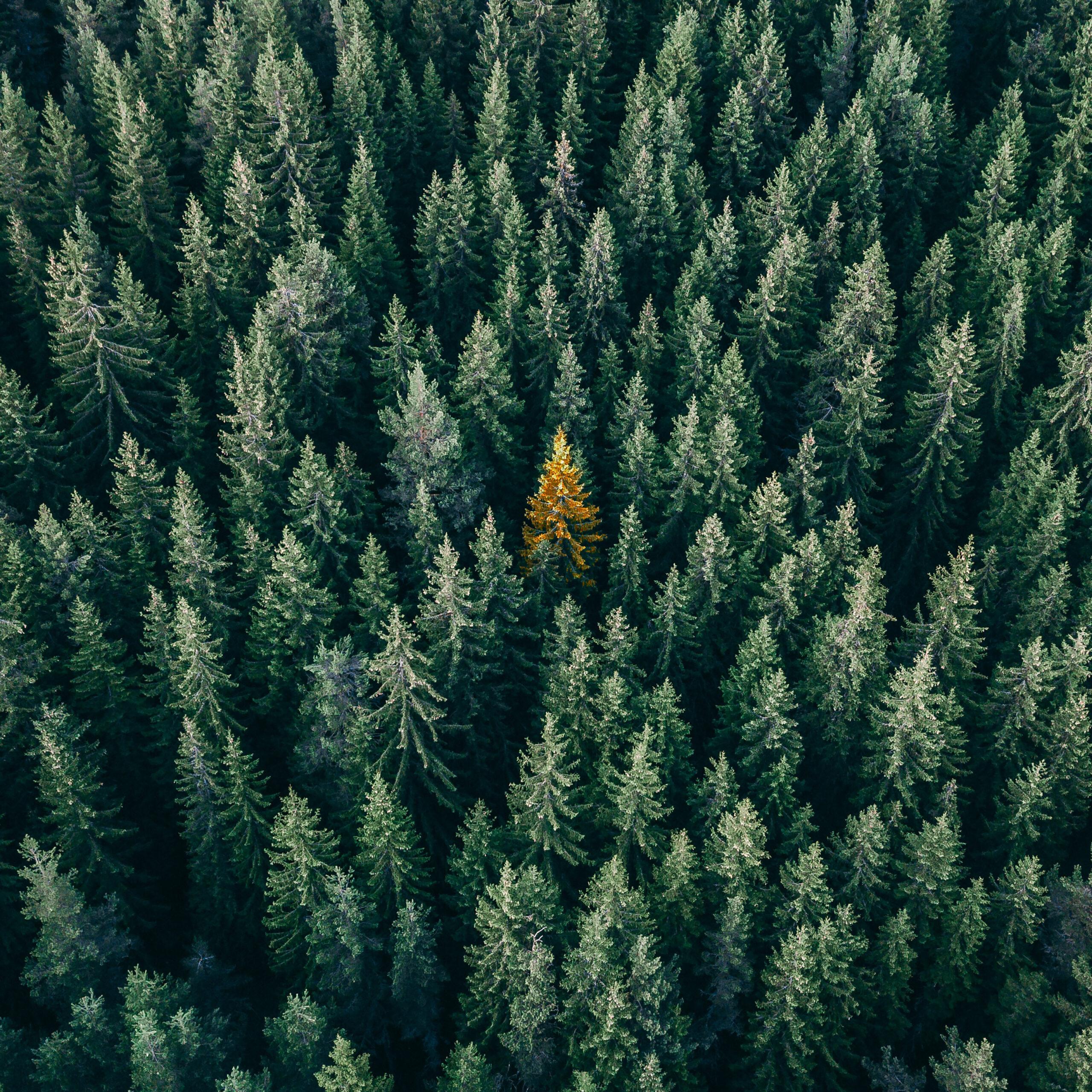 tree_Q